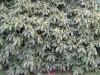 Plants-Bushes_Photo_Texture_B_5611