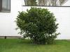 Plants-Bushes_Photo_Texture_B_5612
