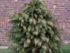 Plants-Bushes_Photo_Texture_B_P1018651