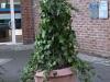 Plants-Bushes_Photo_Texture_B_P1179333