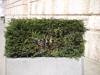 Plants-Bushes_Photo_Texture_B_P4041523