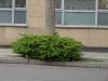 Plants-Bushes_Photo_Texture_B_P4131064