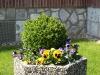 Plants-Bushes_Photo_Texture_B_P4212533