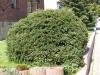 Plants-Bushes_Photo_Texture_B_P4212535