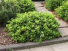 Plants-Bushes_Photo_Texture_B_P4222572