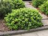 Plants-Bushes_Photo_Texture_B_P4222572