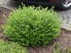 Plants-Bushes_Photo_Texture_B_P4222573