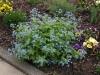 Plants-Bushes_Photo_Texture_B_P4222574