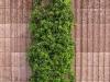 Plants-Bushes_Photo_Texture_B_P5022096
