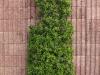 Plants-Bushes_Photo_Texture_B_P5022097
