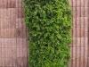 Plants-Bushes_Photo_Texture_B_P5022098