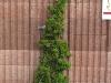 Plants-Bushes_Photo_Texture_B_P5022100
