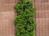 Plants-Bushes_Photo_Texture_B_P5022102