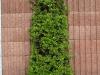 Plants-Bushes_Photo_Texture_B_P5022103