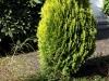 Plants-Bushes_Photo_Texture_B_P5022115