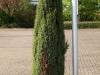 Plants-Bushes_Photo_Texture_B_P5042422