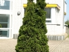 Plants-Bushes_Photo_Texture_B_P5042445