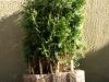 Plants-Bushes_Photo_Texture_B_P5072579