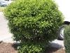 Plants-Bushes_Photo_Texture_B_P5103534