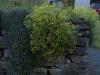 Plants-Bushes_Photo_Texture_B_P5122701