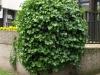 Plants-Bushes_Photo_Texture_B_P5142758