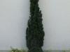 Plants-Bushes_Photo_Texture_B_P6025957