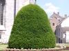 Plants-Bushes_Photo_Texture_B_P6137481