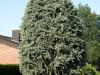 Plants-Bushes_Photo_Texture_B_P6143364