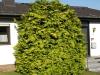 Plants-Bushes_Photo_Texture_B_P6143374