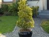 Plants-Bushes_Photo_Texture_B_P6153420