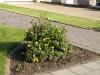 Plants-Bushes_Photo_Texture_B_P6153422
