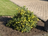 Plants-Bushes_Photo_Texture_B_P6153423