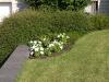 Plants-Bushes_Photo_Texture_B_P6153424