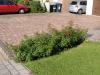 Plants-Bushes_Photo_Texture_B_P6153425