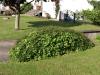Plants-Bushes_Photo_Texture_B_P6153427