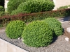 Plants-Bushes_Photo_Texture_B_P6153429