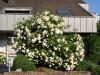 Plants-Bushes_Photo_Texture_B_P6153430