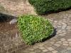 Plants-Bushes_Photo_Texture_B_P6153431
