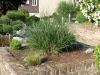 Plants-Bushes_Photo_Texture_B_P6153432