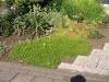Plants-Bushes_Photo_Texture_B_P6153441