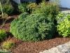 Plants-Bushes_Photo_Texture_B_P6153450