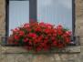 Plants-Flowers