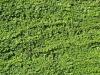 Plants-Hedges_Photo_Texture_B_00758
