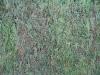Plants-Hedges_Photo_Texture_B_00879