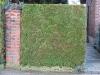 Plants-Hedges_Photo_Texture_B_12350
