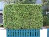 Plants-Hedges_Photo_Texture_B_12380