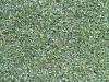 Plants-Hedges_Photo_Texture_B_1655