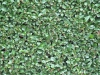 Plants-Hedges_Photo_Texture_B_1656