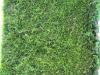 Plants-Hedges_Photo_Texture_B_1659
