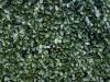 Plants-Hedges_Photo_Texture_B_P1018638
